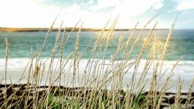 Strand in Malvinas Eilanden stock video