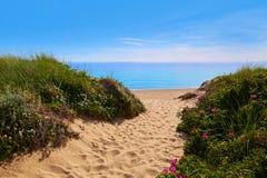 Strand Massachusetts USA för Cape Cod sillliten vik Royaltyfria Foton