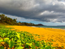 strand maui Arkivfoton