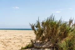 Strand med den gröna busken Royaltyfria Bilder