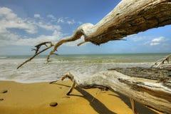 Strand med driftwood Royaltyfri Foto