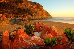 Strand med drivved Royaltyfria Foton