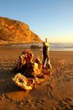 Strand med drivved Royaltyfri Bild