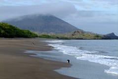 Strand med fåglar Arkivfoto