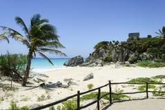 Strand med kokospalmen och klippan Royaltyfri Bild