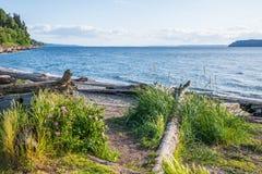 Strand med naturlig vegetation och drivved royaltyfria foton
