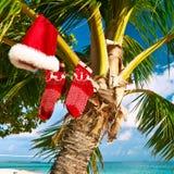 Strand med palmträdet på jul royaltyfria bilder