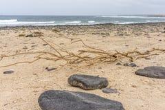Strand med stenar Royaltyfria Foton