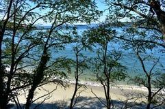 Strand med vit sand, träd och klart vatten med turkos och gröna färger Galicia Spanien, solig dag, blå himmel royaltyfria bilder