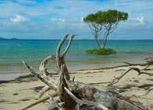 Strand met drijfhout en bomen royalty-vrije stock foto's