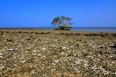 Strand met gebroken koraal en boom alleen in Pulau Gede, Rembang, Indonesië stock afbeelding