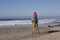 Strand met kameel in Afrika stock afbeeldingen
