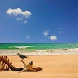 Strand met Karkas royalty-vrije stock fotografie