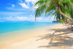 Strand met kokospalm en overzees Royalty-vrije Stock Fotografie