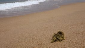 Strand met overzeese golf Stock Foto