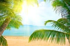 Strand met palm over het zand Stock Afbeeldingen