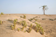 Strand met palm, Rode Overzees, Egypte Stock Foto