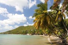 Strand met palmen Stock Fotografie