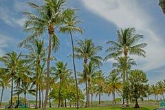 Strand met palmen op Florida stock afbeelding