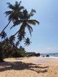 Strand met palmen, zandsteen en stenen stock afbeelding