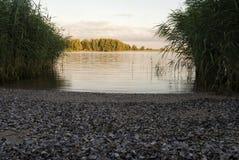 Strand met shells wordt gevuld die Royalty-vrije Stock Afbeeldingen