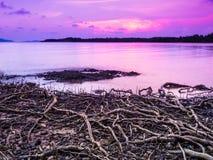 Strand met wortels op overzees, hemel purpere zonsondergang Royalty-vrije Stock Afbeeldingen