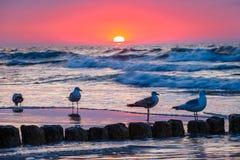 Strand met zeemeeuwen die op de golfbreker zitten Stock Foto