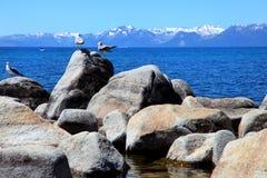 Strand met zeemeeuwen op rotsen en blauwe hemel Stock Afbeeldingen