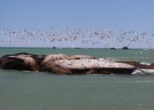Strand met zeemeeuwen op rotsen en blauwe hemel Royalty-vrije Stock Afbeelding