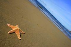 Strand met Zeester Stock Afbeelding