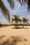 strand miami Royaltyfri Bild