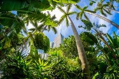 strand miami Fotografering för Bildbyråer