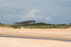 Strand mit Bäumen und Gezeiten- Strom lizenzfreie stockfotografie
