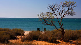 Strand mit Baum Stockfotos