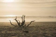 Strand mit einem Baumstumpf bei Sonnenuntergang Lizenzfreie Stockfotos