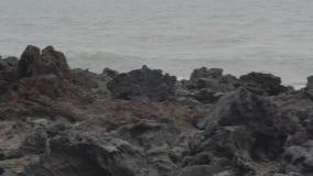 Strand mit Felsen ?ber Seehintergrund stock video
