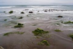 Strand mit Felsen und Meerespflanze Lizenzfreie Stockbilder