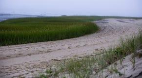 Strand mit grünem Gras in Wellfleet MA auf Cape Cod stockfotografie