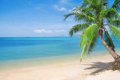 Strand mit Kokosnusspalme und -meer Lizenzfreies Stockfoto