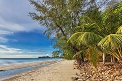 Strand mit Palmen stockfoto