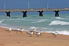 Strand mit Pier und Vögeln Stockfotografie