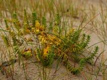 Strand mit Sanddünen stockfotografie