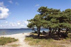 Strand mit Stein und Bäumen Lizenzfreies Stockfoto