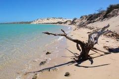 Strand mit totem Baum und Sanddünen Stockbild