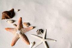 Strand mit vielen Muscheln und Starfish Lizenzfreies Stockfoto