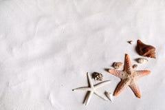 Strand mit vielen Muscheln und Starfish Stockbilder