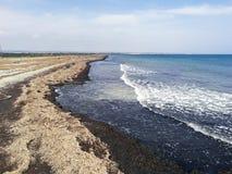 Strand mycket av torra havsväxter vid kusten arkivbild