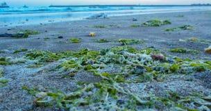 Strand, Natur, Schaum lizenzfreie stockfotos