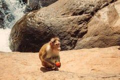 Strand-Naturmeer Indiens Goa Stockbild