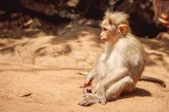 Strand-Naturmeer Indiens Goa lizenzfreie stockfotografie
